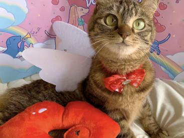 もうすぐバレンタイン♪ 小悪魔天使になっちゃった👼
