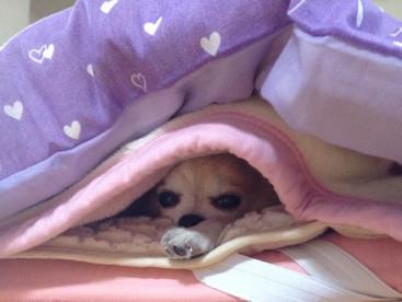 朝だょ〜むーちやん❣️ ぼく、ここから出たくないよ〜🐶 ねむ〜い🐶