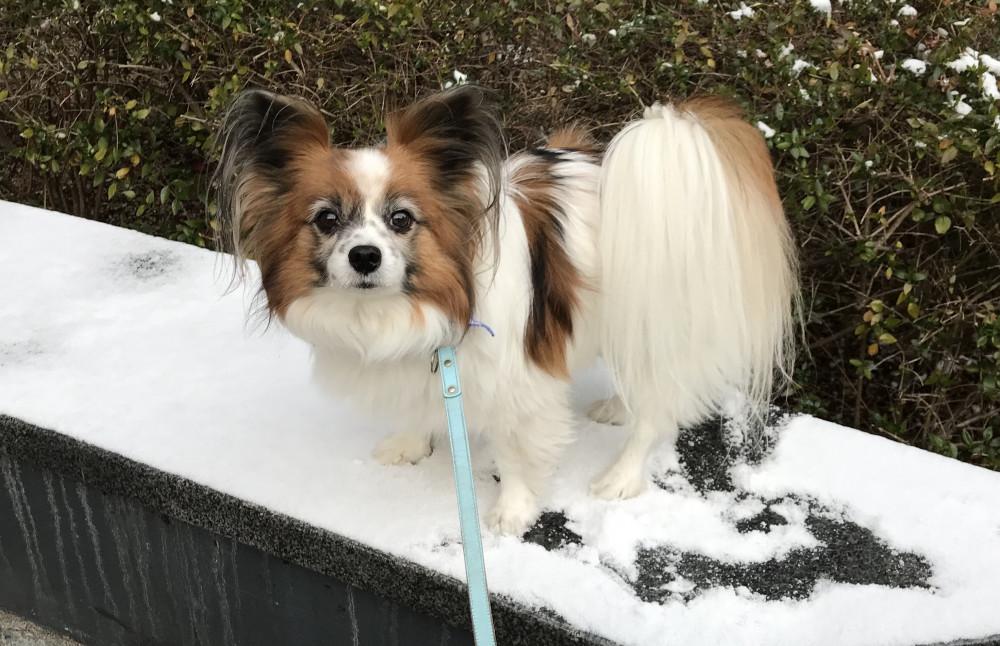 2月、遅い初雪に遭遇(*_*)
