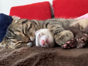 ティノ&くぅでお昼寝😪