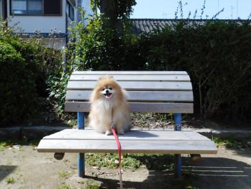 🐾あさんぽ🐾の休憩はこの椅子なの🍀