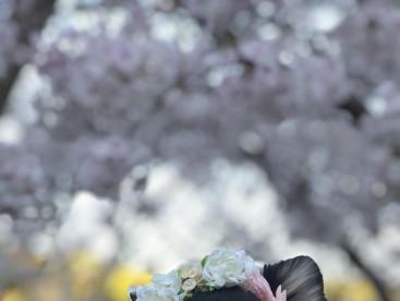 桜とバンビ