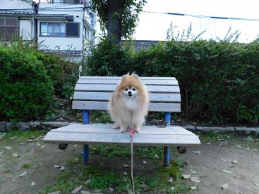 木の椅子は🐾散歩🐾の休憩場所だよ🎵