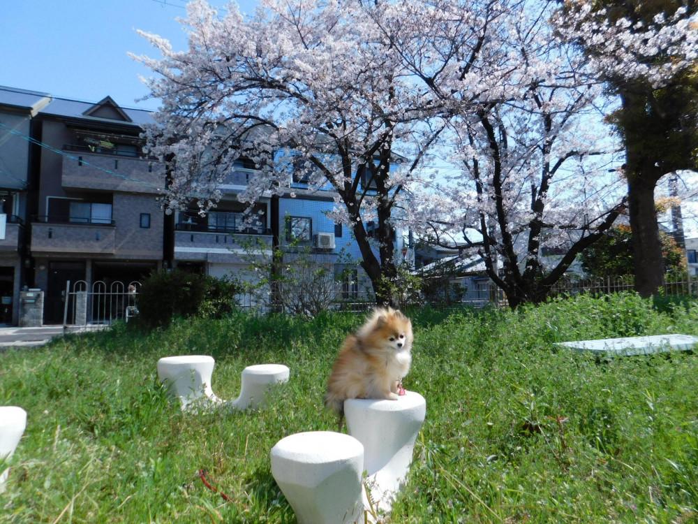 🌸桜の木の下で🌸