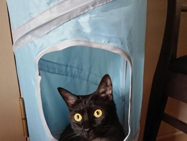 掃除機の音は怖いから隠れます(>_<)
