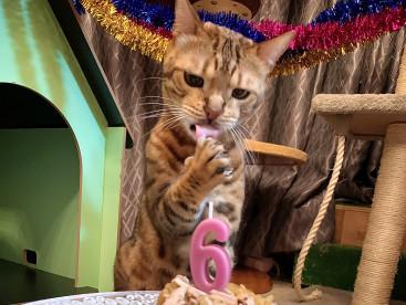 ロディ6歳のお誕生日おめでとう🎂