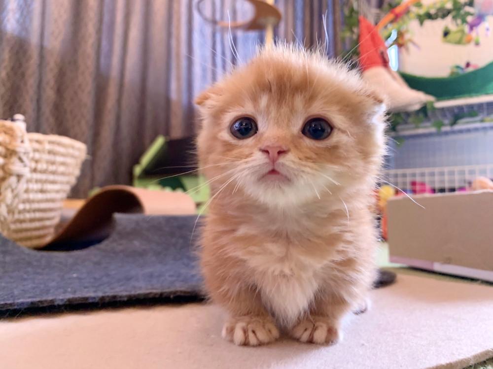 新しく家族になった ひな子ちゃん☺️ 猫とフェレットのお兄ちゃん達とも、すぐに仲良くなりました🥰