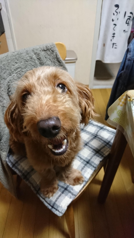 初めまして。ミックス犬(ダップーのオス)を買ってます。6~7年にな…